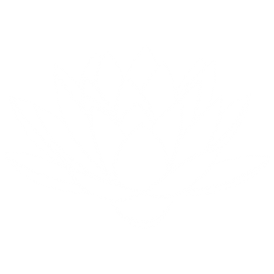 White lotus silhouette, The Healing Space EMDR Treatment Clinic